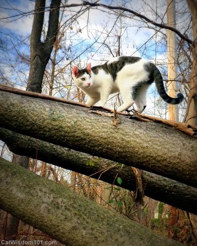 1-cat-agility-parkour-catwisdom 101