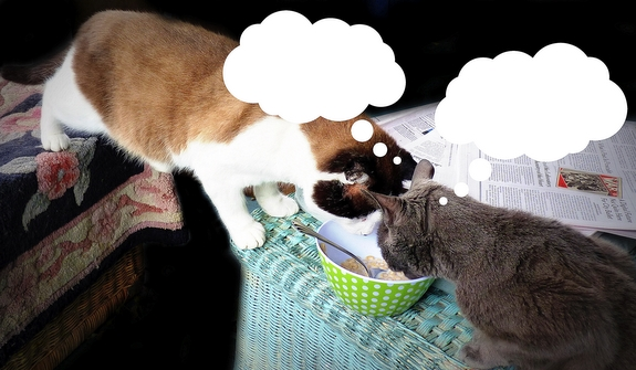 S Yogurt Ok For Cats