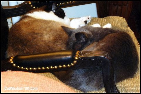 2 cats-napping-formerly feral-cat wisdom 101.com-
