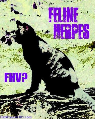 FHV-feline-herpes-cat wisdom 101-