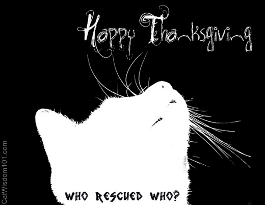 Thanksgiving-card-cat-who rescued who-catwisdom 101-