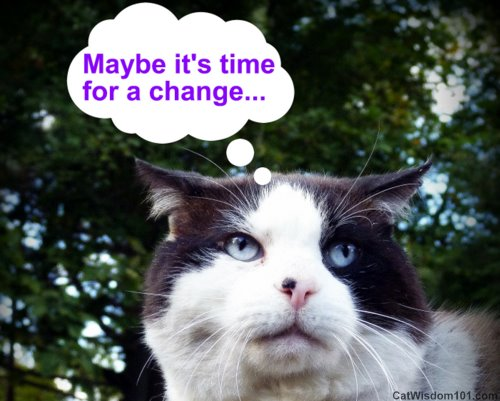 cat-quote-time for change-cat wisdom 101
