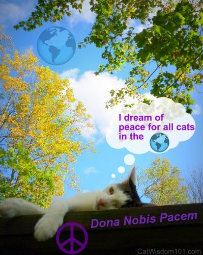 dona-nobis-pacem-blog-4-peace-cat wisdom 101