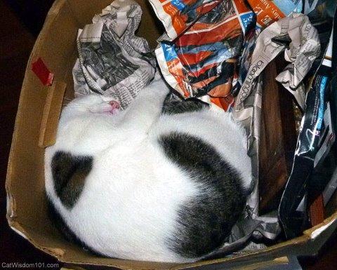 feline-cat nap-box-funny