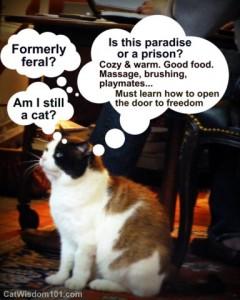 formerly feral- cat-cartoon