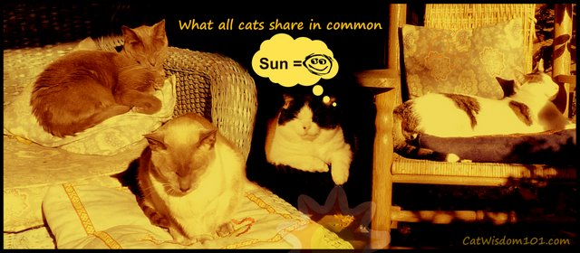 sunbathing-cats-happy- cat wisdom 101