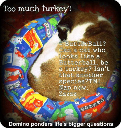 thanksgiving-turkey-christmas-butterball-cat-cartoon-funny Gratitude On Thanksgiving When Life Isn't Purrfect