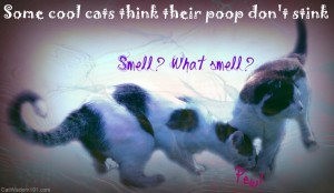 think your shit don't stink-cool cats-funny-poop