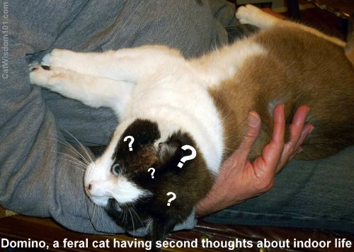 Domino-formerly feral-second thought-LOL cat-cat wisdom 101