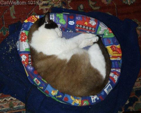 domino-ex-feral-cat bed-cat wisdom 101