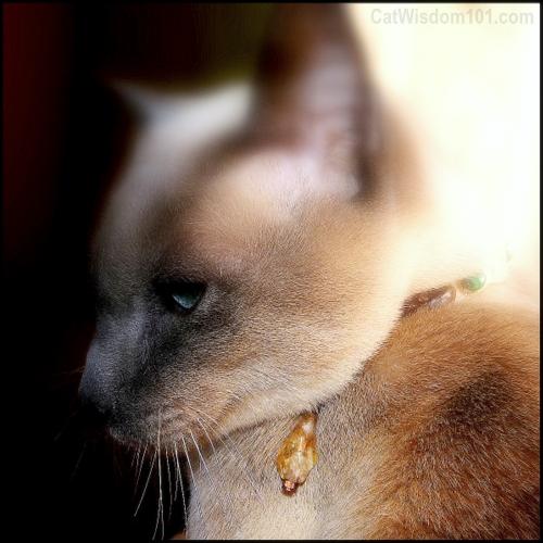feline-fine art-pet portrait-photography-layla morgan wilde-cat wisdom 101