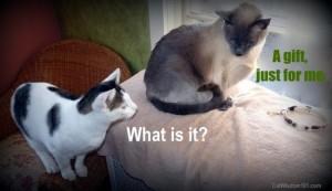 healing-stone-cat-collar-LOL cat-gift