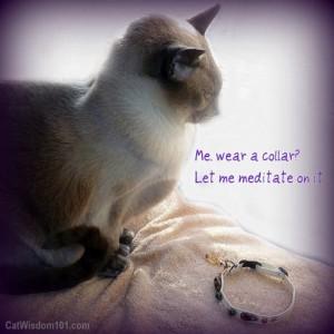 healing-stone-colar-cat-magic-merlin-300x300 A Feline Healing Gift