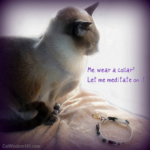 healing-stone-collar-cat-magic-merlin