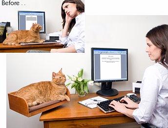 kitinbox cat perch-refined feline-cat wisdom 101