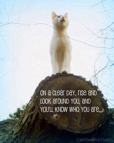 Cat Wisdom Quotes Quotesgram