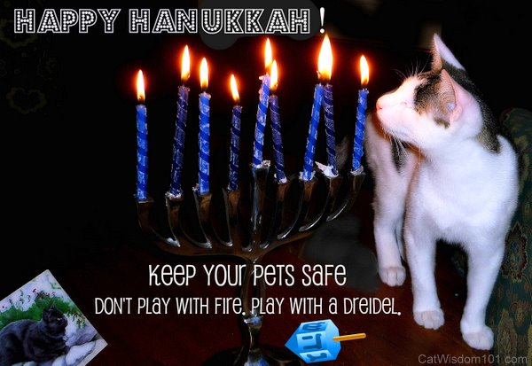 Hanukkah Lights and Astrology Cats