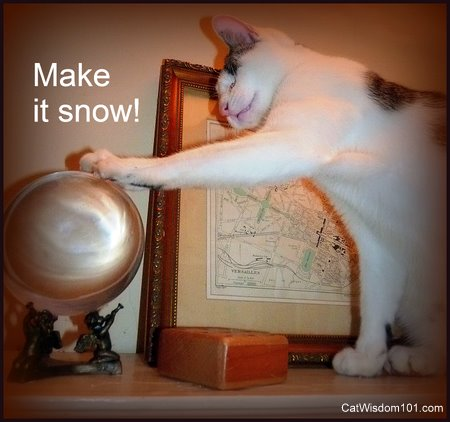 snow globe-crystal ball-funny-cat