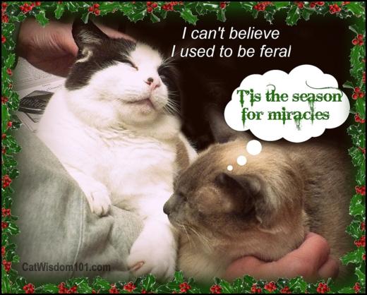 tis the season-formerly feral-cat-humor- cat wisdom 101