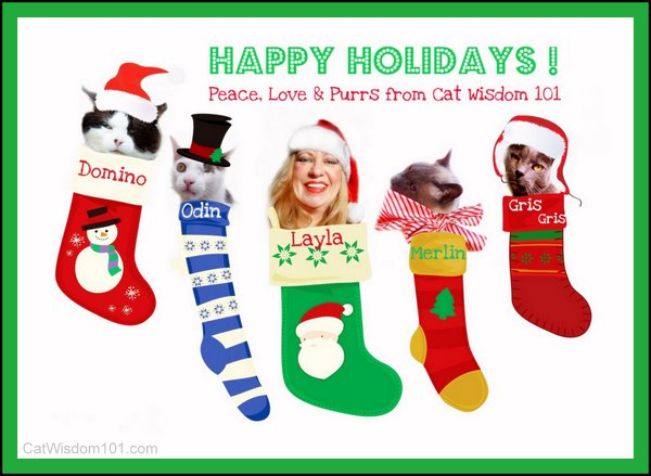 xmas-LOL cats-christmas cat card-cat wisdom 101-holidays-cat