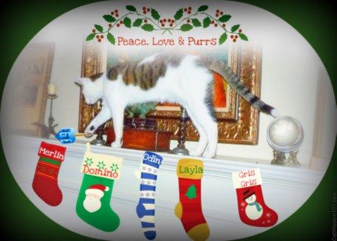 xmas-cat-stocking-cat wisdom101-christmas