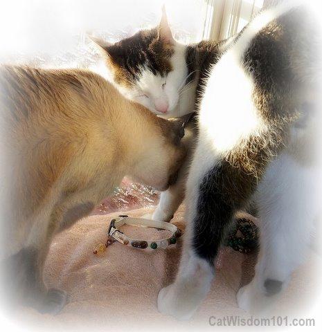 xmas-cats-LOL-gift-collar-cute A Feline Healing Gift