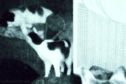 xmas-cats-friends-cat wisdom 101