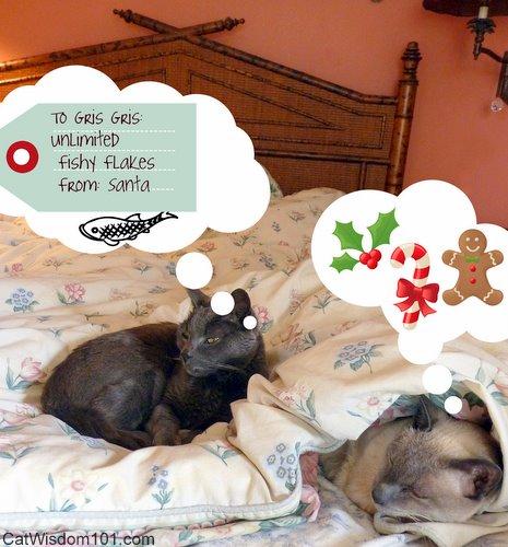 xmas-cats-santa-wishlist-cat wisdom 101