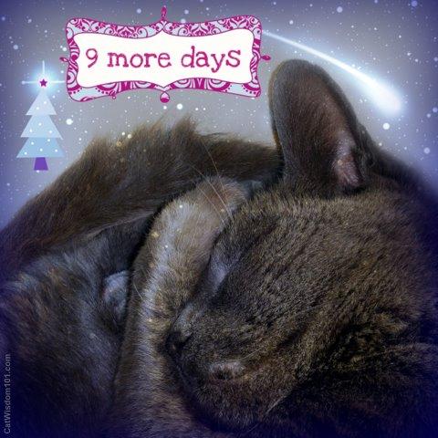 xmas countdown-LOL cat-cat wisdom 101.com
