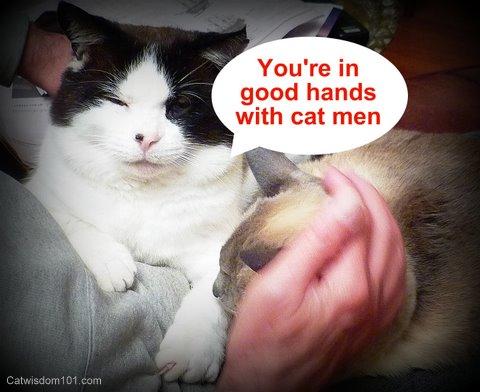 youre-in-good-hands-with-cat-men-LOL-cat-wisdom-101.jpg