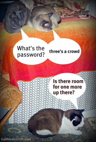 3 cats-lol cats-cat wisdom 101-three's a crowd-quote