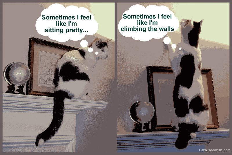 LOL cat-sitting pretty-quote-climbing the wall-cat wisdom 101
