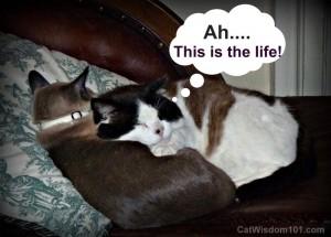 LOL cat-formerly feral-cat bonding-behavior-Cat Wisdom 101
