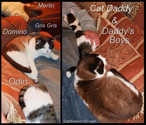 LOL cats-cat daddy-cat wisdom 101