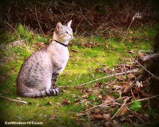 a-cat-cat wisdom 101.com