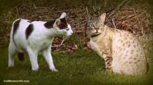cat-curious-friendly-behavior-cat wisdom 101