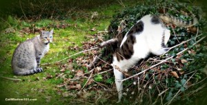 cat-playing-fun-cat wisdom 101
