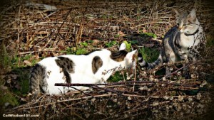 cats-playing-tail-behavior-cat wisdom 101