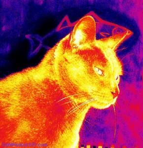art-cat-fish-layla morgan wilde-cat wisdom 101