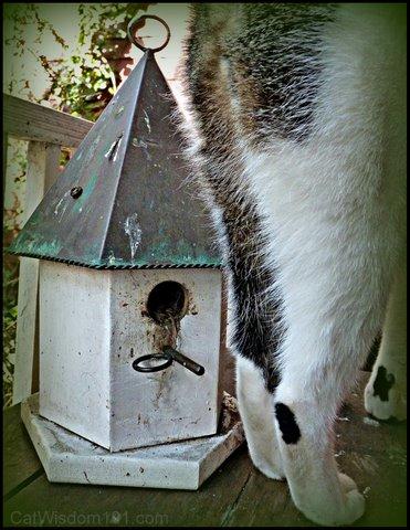 bird-cat-lol-cat wisdom 101
