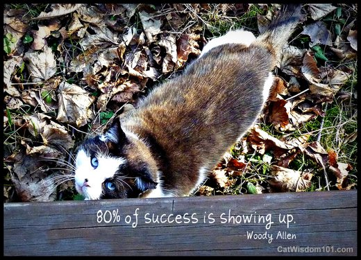 cat wisdom 101-feral-outdoor-success-quote-woody allen