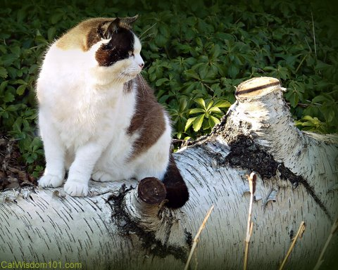 feral-fine art photography-cat-birch tree-cat wisdom 101
