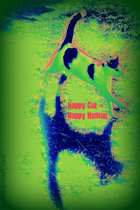 happy cat = happy human-cat wisdom 101