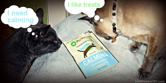 pet naturals-calming- cat wisdom 101-LOL cat