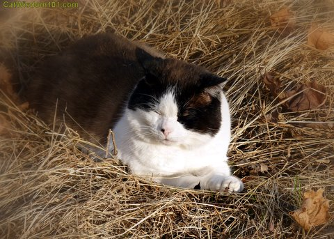 quote-make hay while the sun shines-feral-cat-cat wisdom 101- feline photography