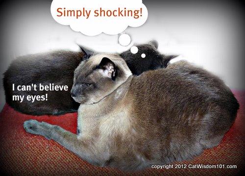 shocking-cats-art-catwisdom 101.com