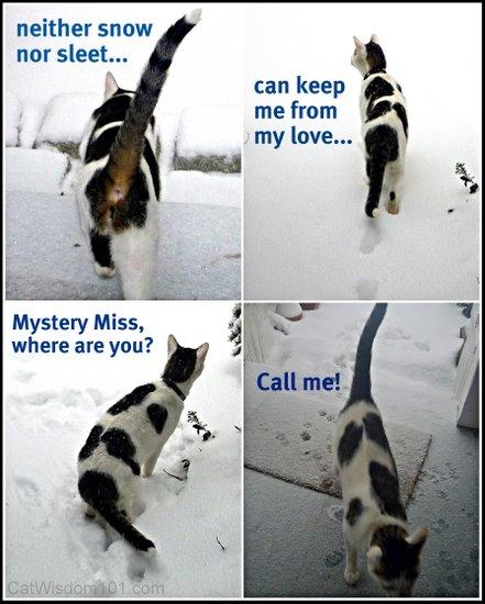 snow-cat-humor- cat wisdom 101