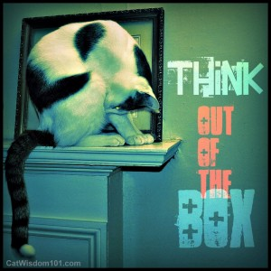 think out of the box-quote-cat-art-cat wisdom 101