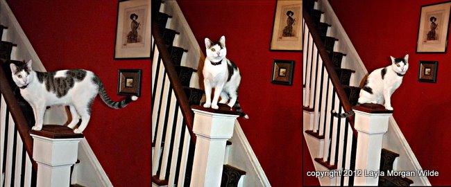 training-cat-sit-cat wisdom 101