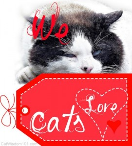 we love cats-valentine-cat wisdom 101